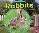Rabbits (Pebble Plus)