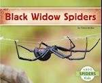Black Widow Spiders (Spiders)