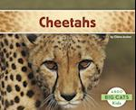 Cheetahs (Big Cats)