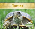 Turtles (Reptiles)