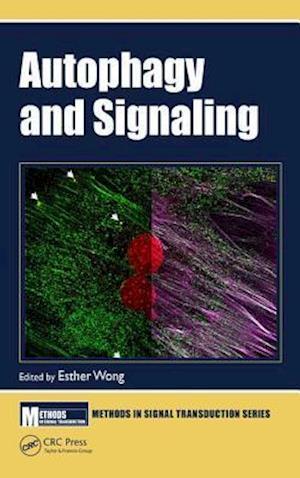 Autophagy and Signaling