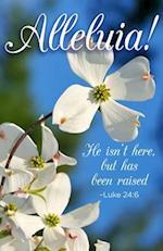 He Isn't Here Dogwood Easter Bulletin (Pkg of 50)