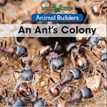 An Ant's Colony (Animal Builders)