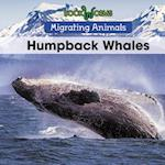 Humpback Whales (Migrating Animals)