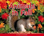 Animals in Fall (Welcome Fall)