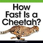 How Fast Is a Cheetah? (Comparison Fun)