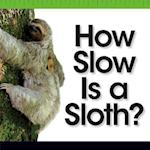 How Slow Is a Sloth? (Comparison Fun)