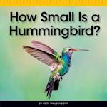 How Small Is a Hummingbird? (Comparison Fun)