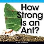 How Strong Is an Ant? (Comparison Fun)
