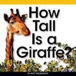 How Tall Is a Giraffe? (Comparison Fun)
