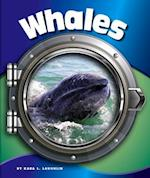 Whales (In the Deep Blue Sea)