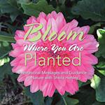 Bloom Where You Are Planted: Inspirational Messages and Guidance In Nature with Sheila Henley