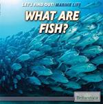 What Are Fish? (Lets Find Out Marine Life)