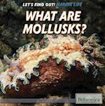 What Are Mollusks? (Lets Find Out Marine Life)