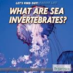 What Are Sea Invertebrates? (Lets Find Out Marine Life)