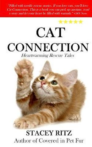 Bog, paperback Cat Connection af Stacey Ritz