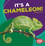 It's a Chameleon! (Bumba Books Rain Forest Animals)