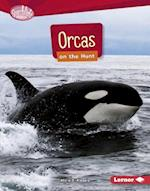 Orcas on the Hunt (Searchlight Books)
