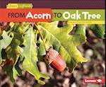 From Acorn to Oak Tree (Start to Finish Second)