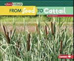 From Seed to Cattail (Start to Finish)