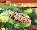 From Cone to Pine Tree