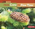 From Cone to Pine Tree (Start to Finish Second)