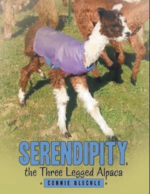 Serendipity, the Three Legged Alpaca
