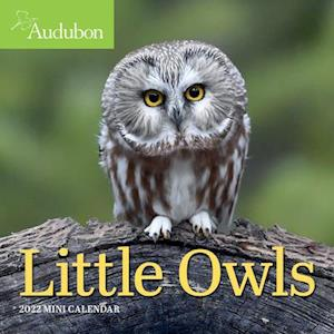 2022 Audubon Little Owls Mini