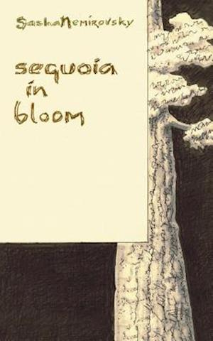 Sequoia in Bloom