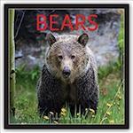 Bears 2018 Calendar