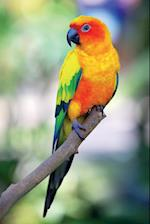 Rainbow Lorikeet Vol.1 Notebook & Journal. Productivity Work Planner & Idea Notepad