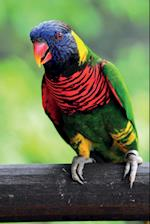 Rainbow Lorikeet Vol.2 Notebook & Journal. Productivity Work Planner & Idea Notepad