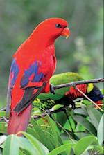 Red Lorikeet Notebook & Journal. Productivity Work Planner & Idea Notepad