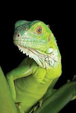 Green Iguana Notebook & Journal. Productivity Work Planner & Idea Notepad