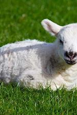 Baby Lamb af Dibiasio Publications