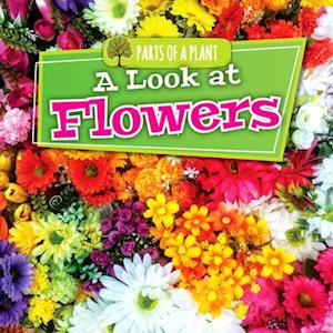 A Look at Flowers