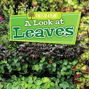 A Look at Leaves