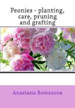 Peonies - Planting, Care, Pruning and Grafting