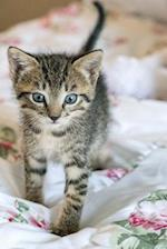 A Gray Striped Kitten Walking Journal