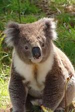 A Koala Bear from Australia Journal