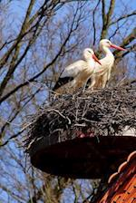 Two Storks in a Nest Bird Journal