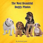 The Most Beautiful Doggy Photos