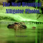 The Most Beautiful Alligator Photos