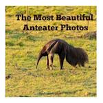 The Most Beautiful Anteater Photos