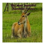 The Most Beautiful Antelope Photos
