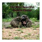 The Most Beautiful Baboon Photos