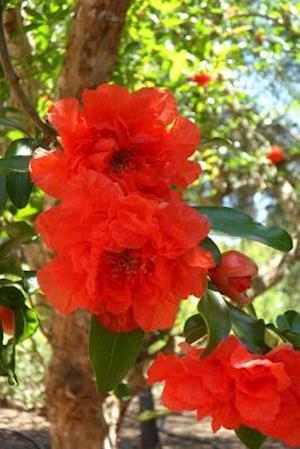 Bog, paperback Pomegranate Blossoms Flower Journal af Cs Creations