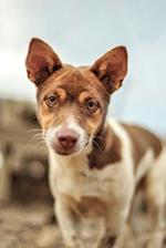 Brown and White Mixed Breed Dog Journal