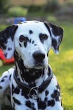 Dalmatian Portrait Dog Journal