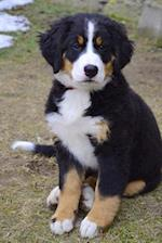 Burmese Mountain Dog Puppy Journal